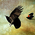 Crow And Red-winged Blackbird by Peggy Collins