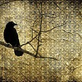 Crow In Damask by Gothicrow Images