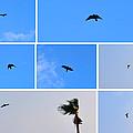 Crow In Flight by Jay Milo