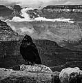 Crow by Krzysztof Wierzbicki