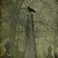 Crow On Spire by Gothicrow Images