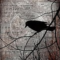 Crow Thoughts Collage by Gothicrow Images