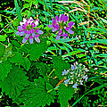 Crown Vetch And Catnip In Pipestone National Monument-minnesota by Ruth Hager