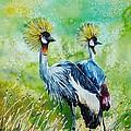 Crowned Cranes by Zaira Dzhaubaeva
