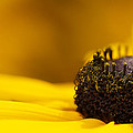Crowning Sunshine by Lisa Knechtel