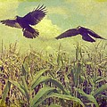 Crows Of The Corn by Gothicrow Images