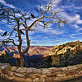 Crows Of The Grand Canyon by Blake Richards