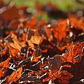 Crunchy Carpet by Rima Biswas