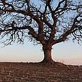 Cryptic Tree by Kellan Ehrich