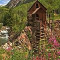 Crystal Mill Wildflowers by Adam Jewell