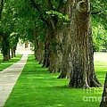 Csu Tree Path by Rincon Road Photography By Ben Petersen