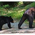 Cub Following Mom by Debora Morrison Short