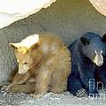 Cubs In A Pod by Kim Petitt