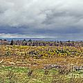 Culloden Moor by Elvis Vaughn
