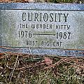 Curiosity by Ed Weidman