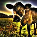 Curious Calf Dark by Todd Carter