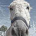 Curious Donkey by Pauline Flesseman