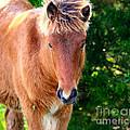 Curious Foal by Marty Fancy