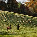 Curious Horses by Georgia Mizuleva