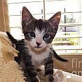 Curious Kitten by Jussta Jussta