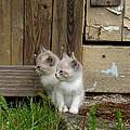 Curious Kittens by Rain Shine