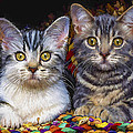 Curious Kitties by David Wagner