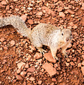 Curious Squirrel 2 by Jamie Heeke