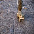 Curious Squirrel by Michele Stoehr