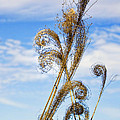 Curled Grasses by Brian King