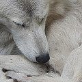 Curled Up by Laura Elder