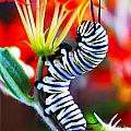 Curly Caterpiller by Betsy Straley