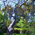 Curly Tree by Mark Blauhoefer