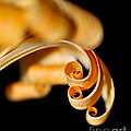 Curlz by Kaye Menner