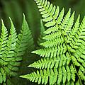 Curved Fern Leaf by Christina Rollo