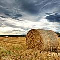 Cut Field by Jane Rix