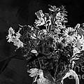 Cut Flowers In Monochrome by Les Palenik