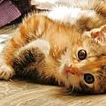 Cute Be Mine by VLee Watson