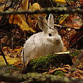Cute Bunny In The Forest