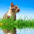 Cute Cat Outdoor Portait by Michal Bednarek