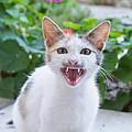 Cute Cat by Roy Pedersen
