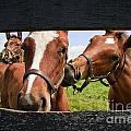 Cute Colts by Jill Lang