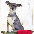 Cute Dog Washtub by Edward Fielding
