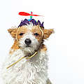 Cute Dog With Propeller Hat - The by Amandafoundation.org