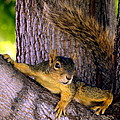 Cute Fuzzy Squirrel In Tree Near Garden by Amy McDaniel