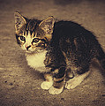Cute Kitten by Pati Photography