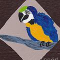 Cute Little Macaw  by Melissa Vijay Bharwani