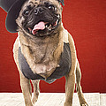 Cute Pug Dog In Vest And Top Hat by Edward Fielding