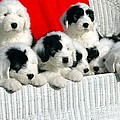 Cute Puppies by Kathleen Struckle