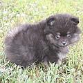 Cute Puppy by Trudi Olfert