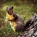 Cute Squirrel by Robert Bales